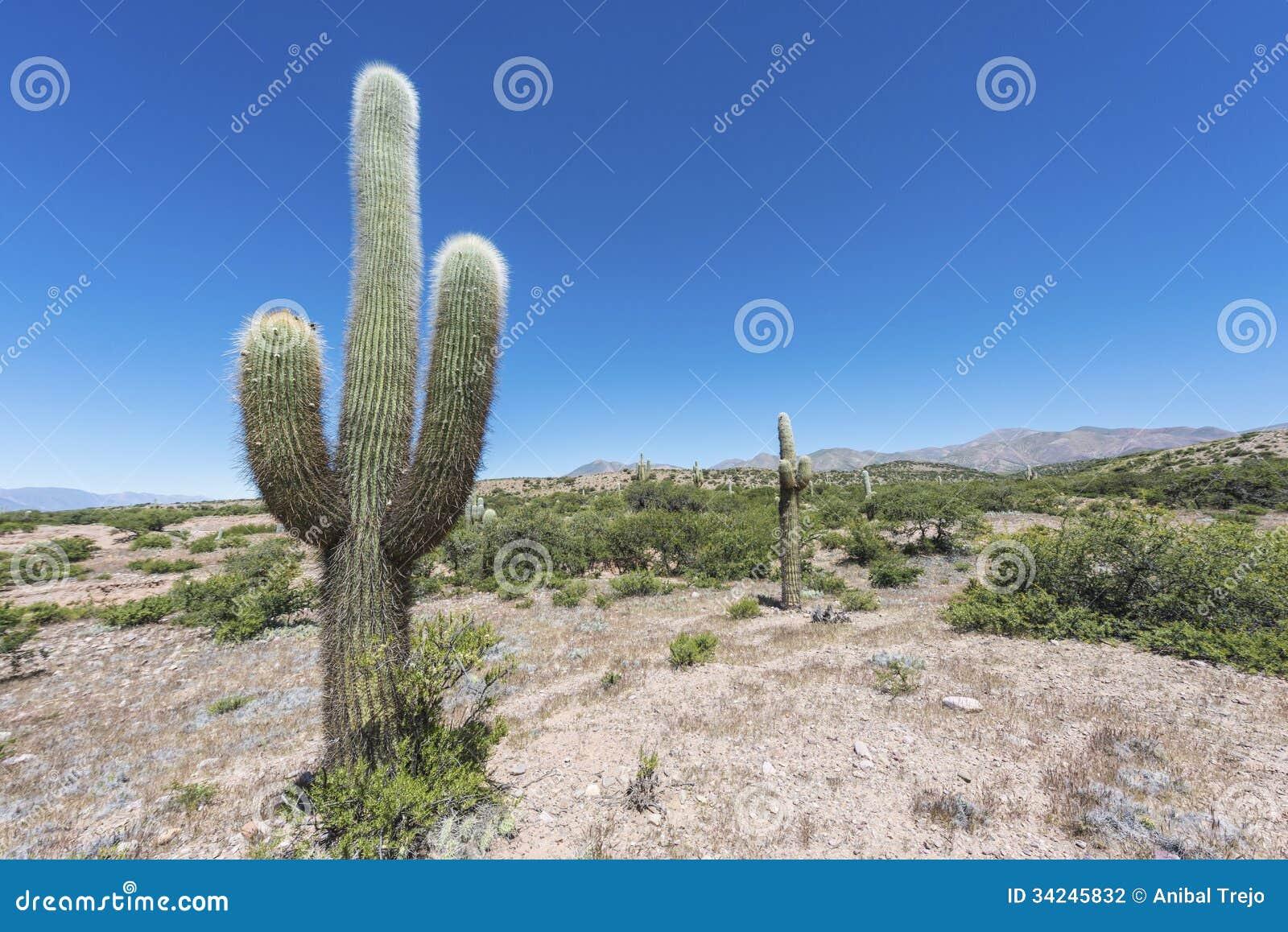 Cactus quebrada de humahuaca in jujuy argentina stock for Cactus argentina
