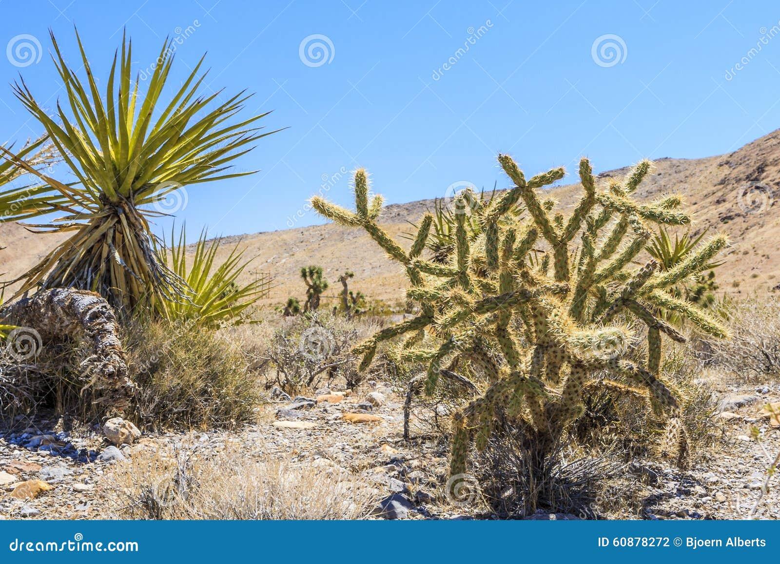 Nature S Sunshine Yucca