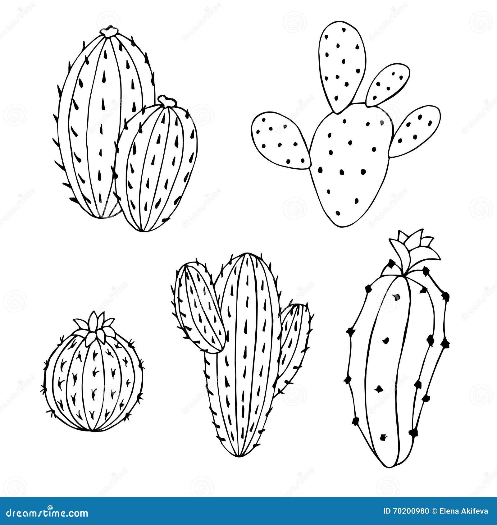 Cactus Set Graphic Art Black White Isolated Illustration ...