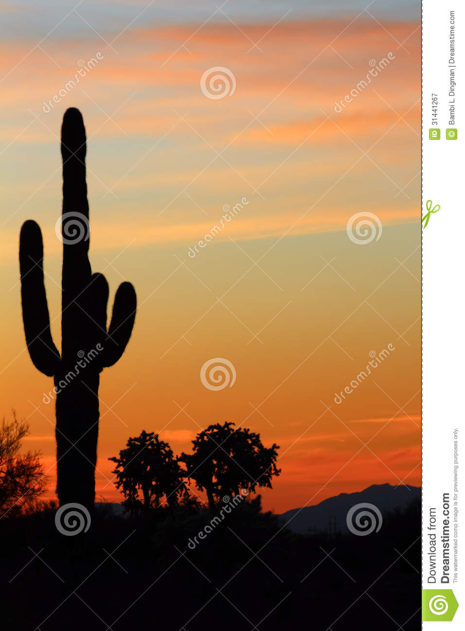 cactus silhouette stock image  image of nature  dusk