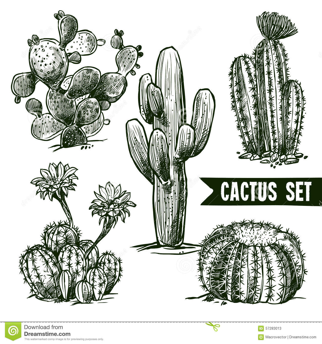 Cactus Sketch Set Stock Vector. Image Of Concept Mexican - 57283013