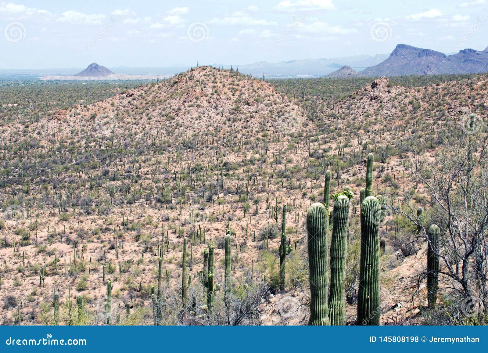 Cactus, Sonoran Desert, Arizona