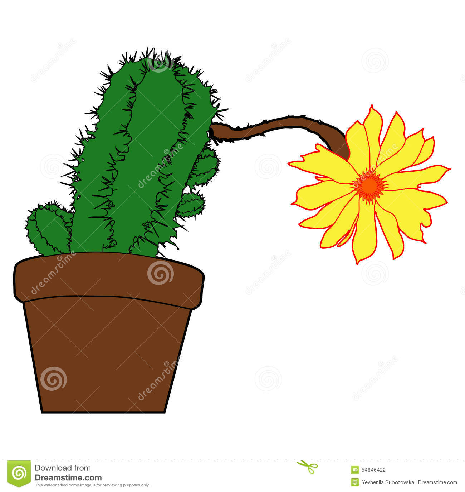 Cactus succulent fleurs à la maison plantes d intérieur dans des pots fleurs