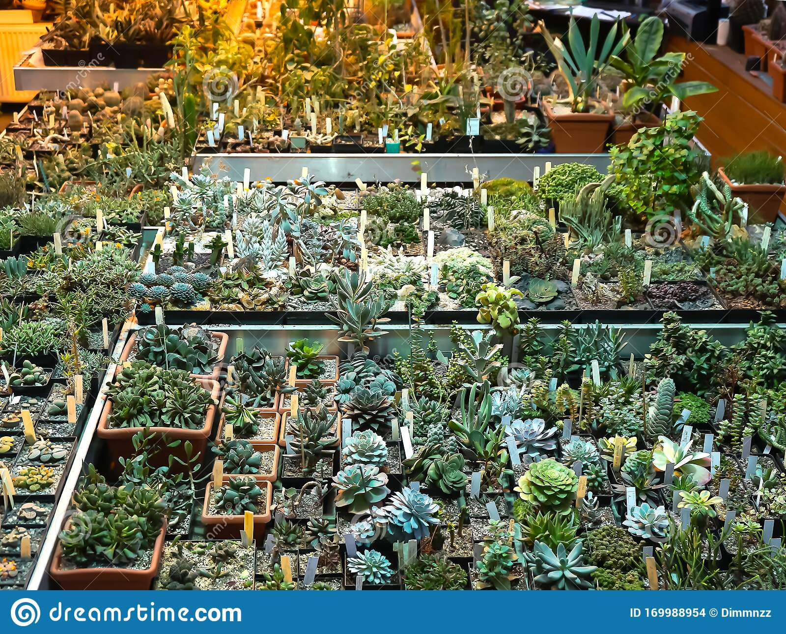 Cactus And Succulent In Flower Pots Indoor Plants In Plastic Pots