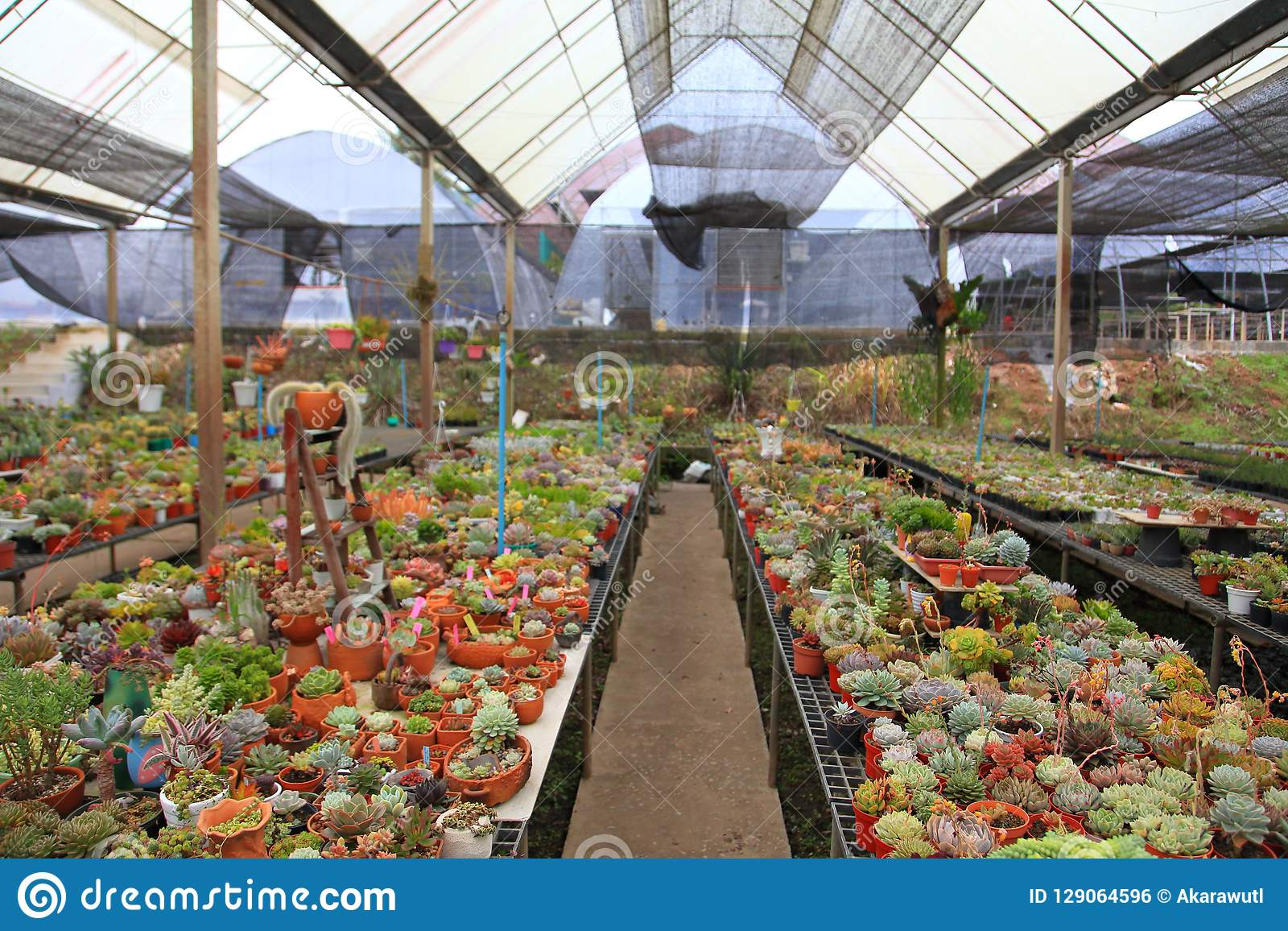 Terrific Collection Of Cactus And Succulent Garden Greenhouse For Dry Home Interior And Landscaping Oversignezvosmurscom