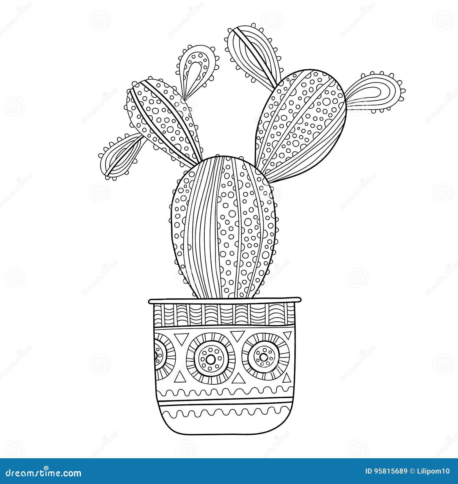 Cactus succulent illustration noire et blanche pour livres de coloriage pages illustration de - Cactus coloriage ...