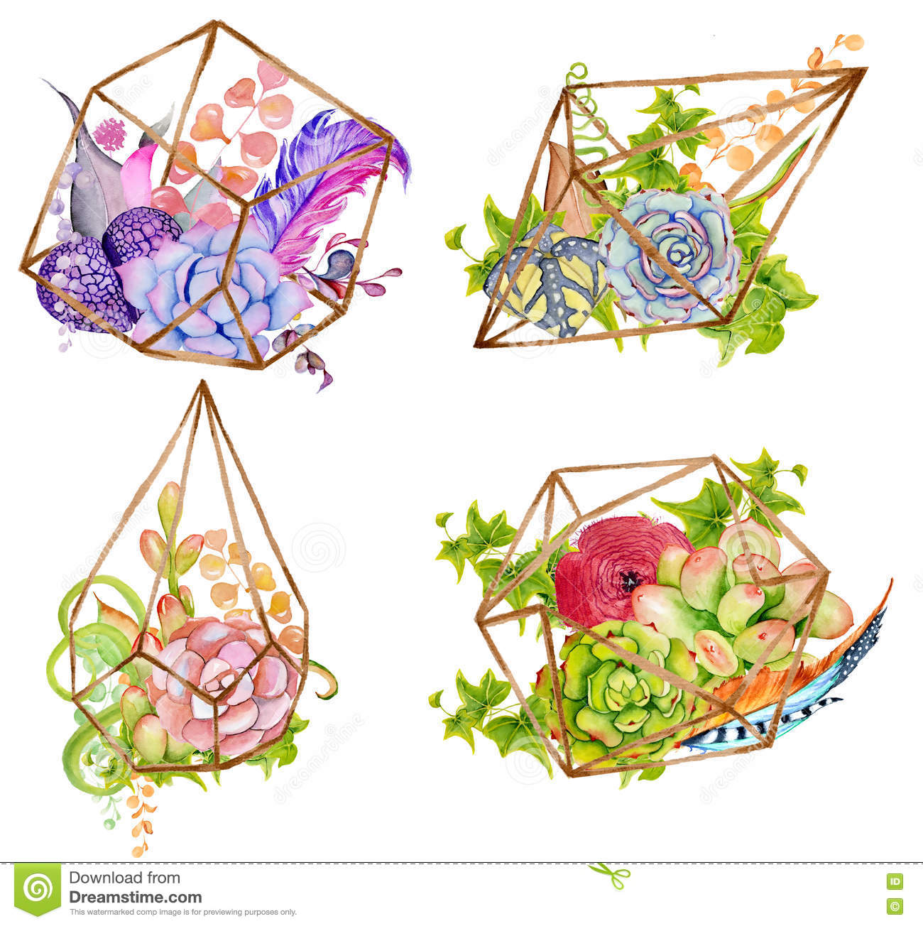 Cactus And Succulent Set With Geometrical Terrarium Stock Illustration Illustration Of Watercolor Doodle 81218331