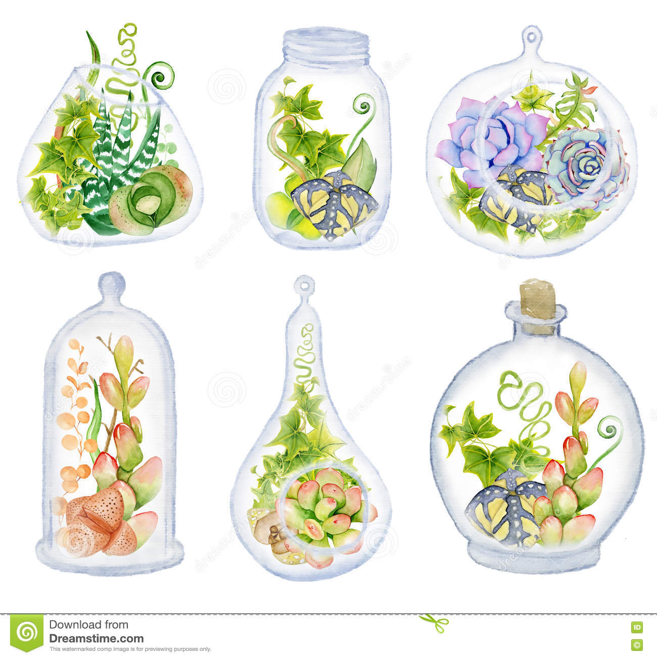 Cactus And Succulent Set With Glass Terrarium Stock Illustration Illustration Of Glass Green 81218184