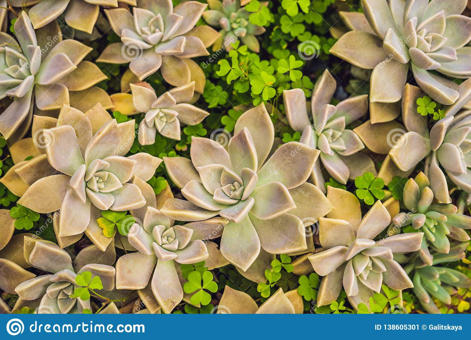 Cactus Succulents In The Ground In The Park Stock Image