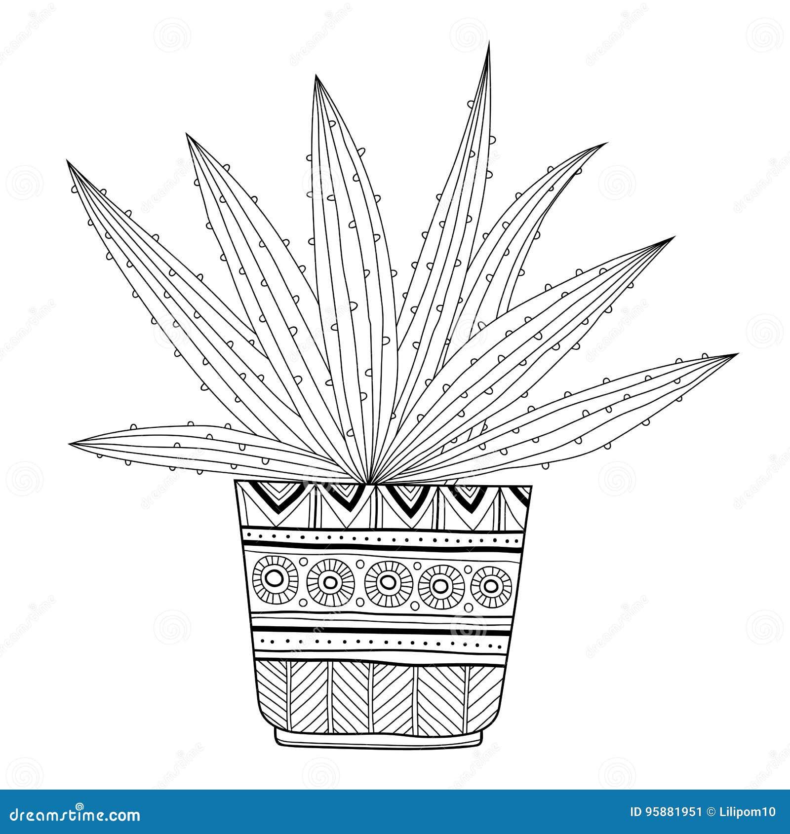 Cactus, Suculento Ejemplo Blanco Y Negro Para Los Libros De Colorear ...