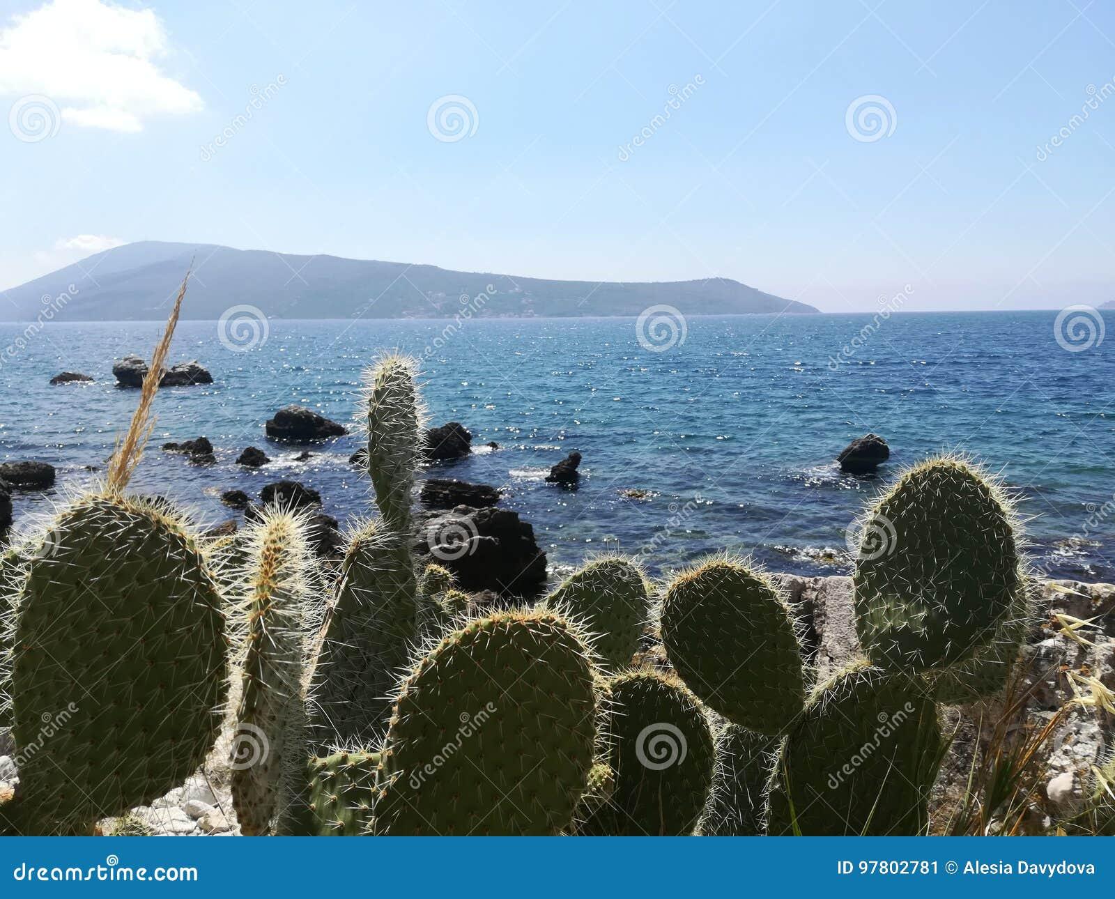 Cactus sui precedenti del mare e delle montagne