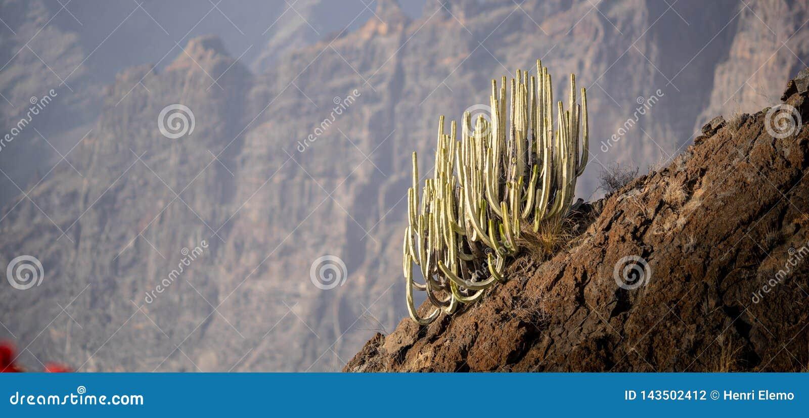 Cactus sur une colline avec le bokeh sur le fond pour isoler le cactus et pour présenter la haute altitude et l échelle