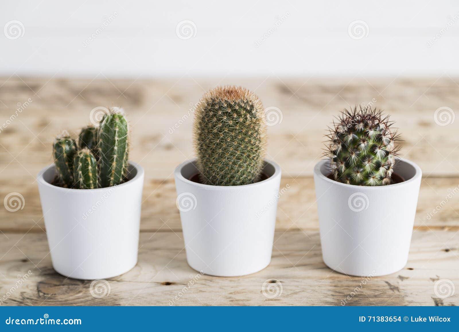 Cactus Trio Stock Photo Image 71383654