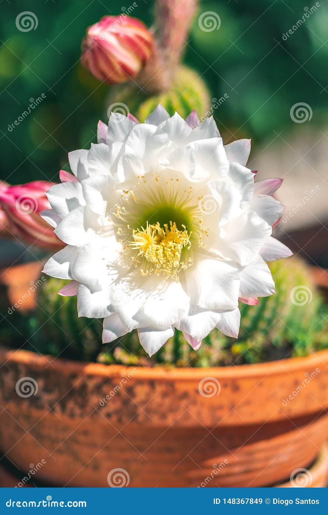 Cactus in un barattolo