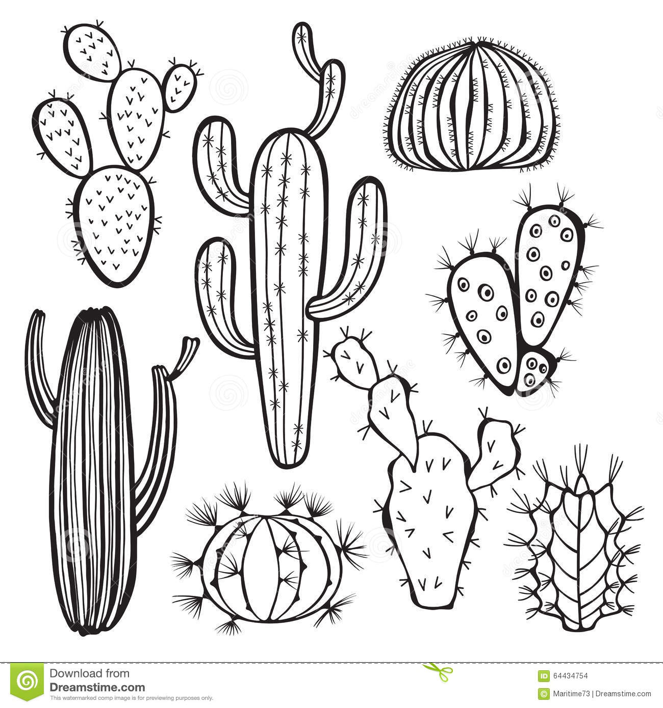 Cactus On White Background Vector Hand Drawn Set Ill