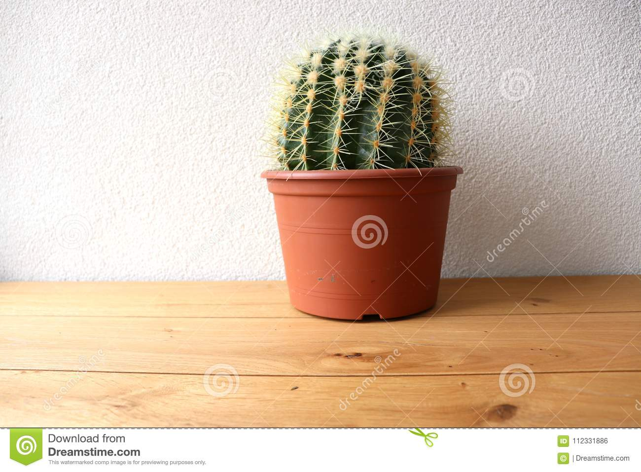 Cactus on a wooden table