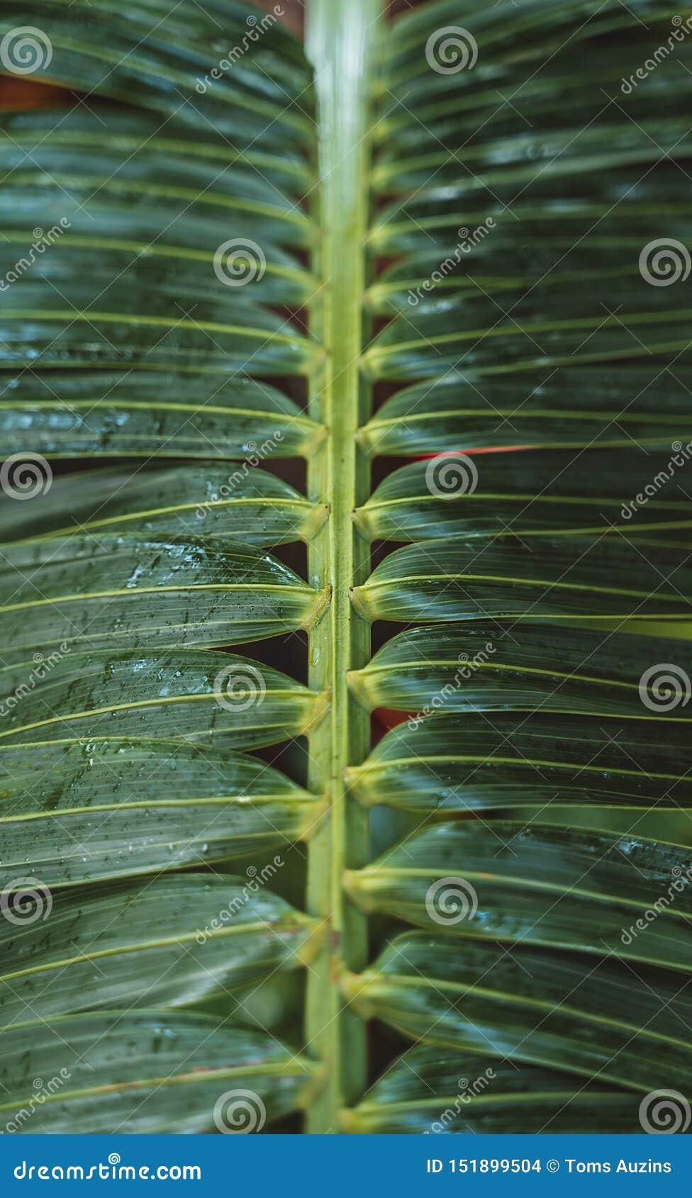 Cactus y plantas a partir de diez diversas zonas de clima