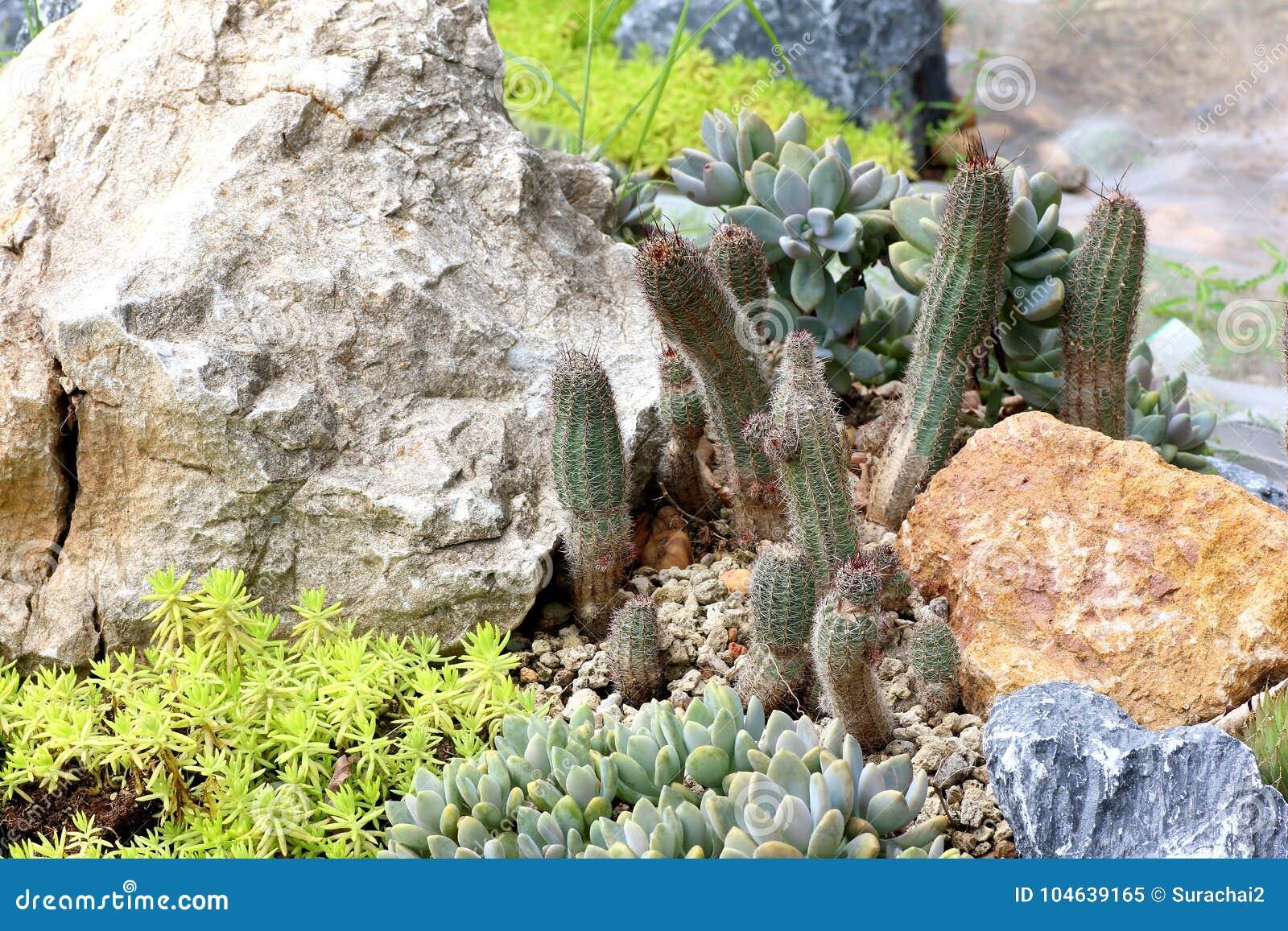 Download Cactusinstallaties Op Tuinachtergrond Stock Afbeelding - Afbeelding bestaande uit installatie, tuin: 104639165