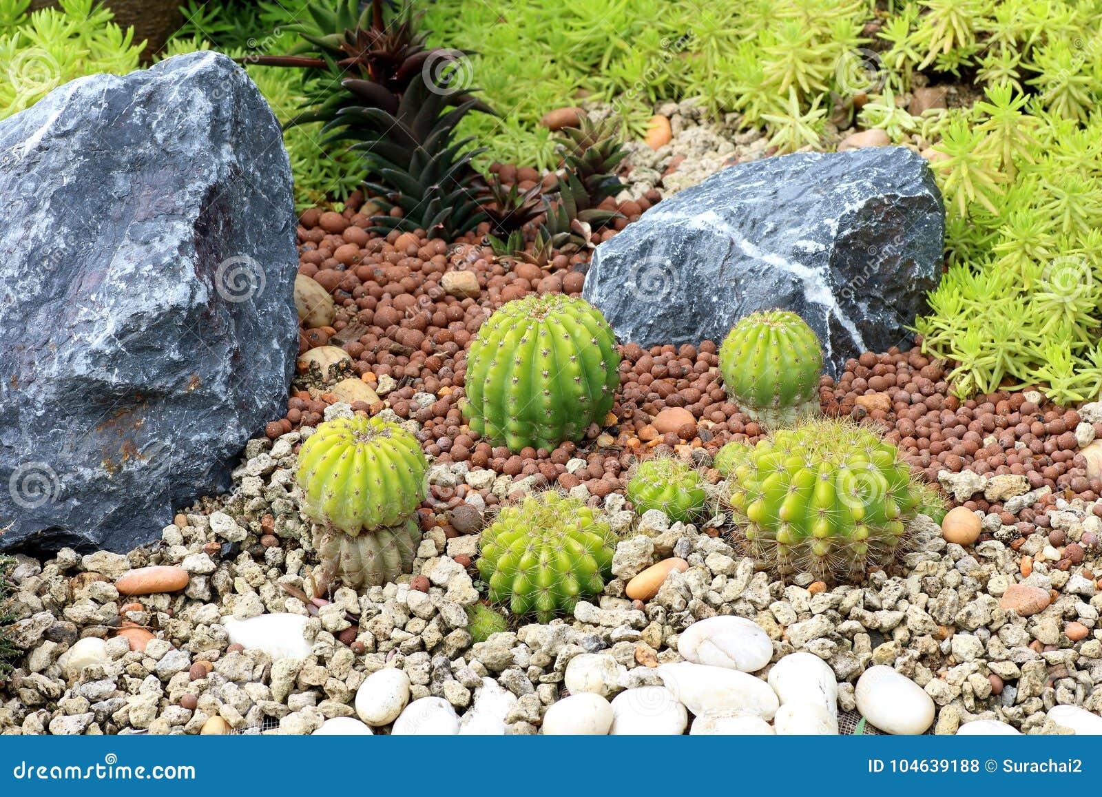 Download Cactusinstallaties Op Tuinachtergrond Stock Foto - Afbeelding bestaande uit naughty, tropisch: 104639188