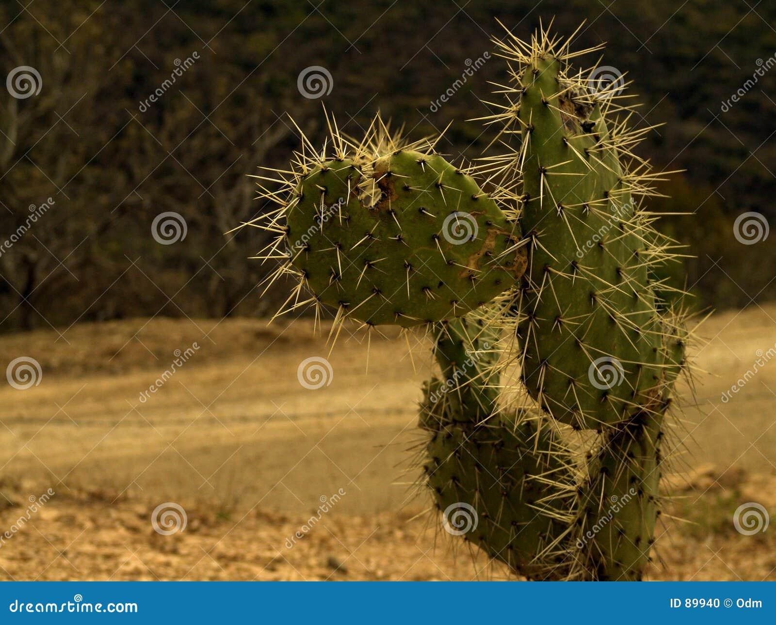 Cactusl sur la route