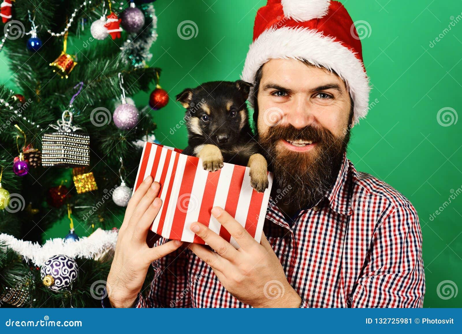Cadeau d an neuf Homme dans des jeux de chapeau de Noël avec le chiot