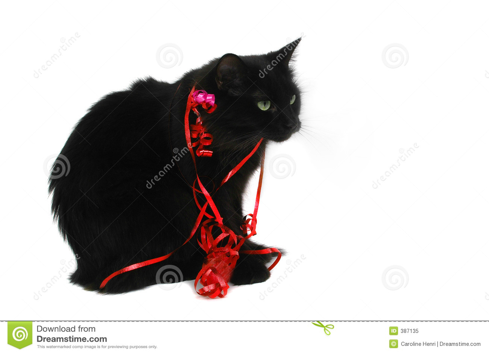 Cadeau de chat noir de Noël