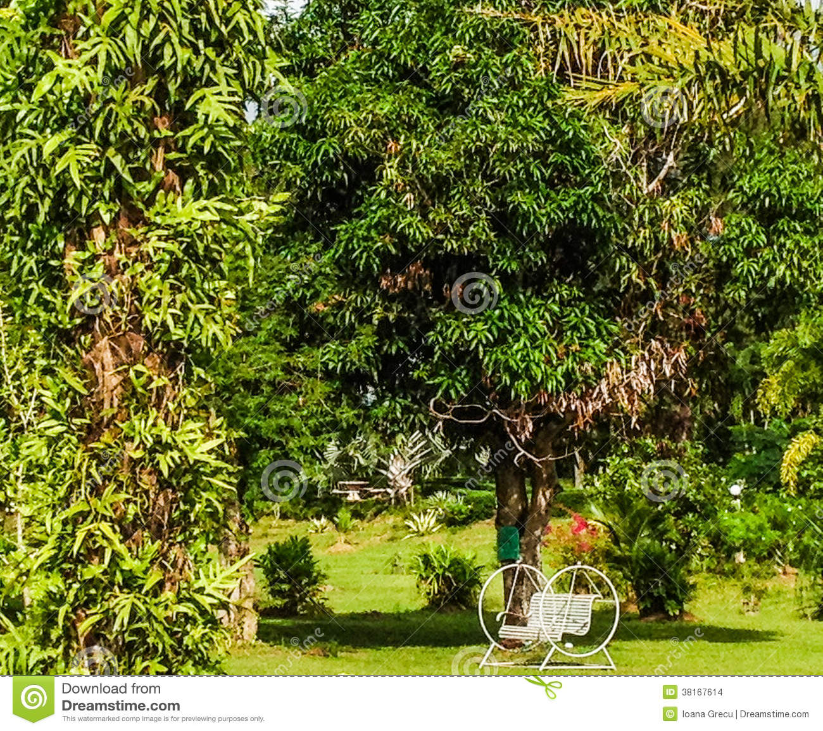 Cadeira De Balanço No Jardim Tropical Imagens de Stock Imagem  #91A823 1300x1172