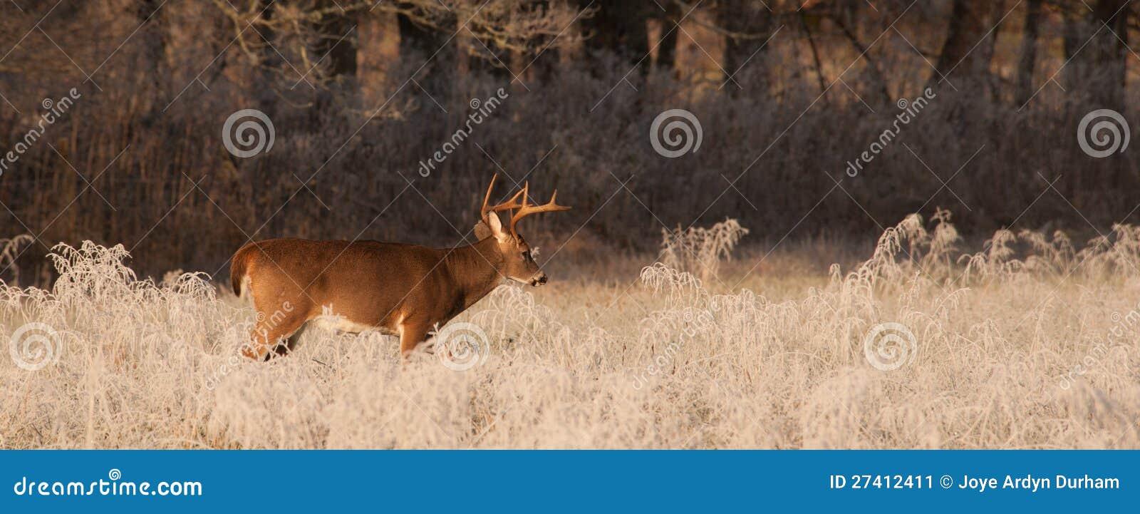 Cades Buck