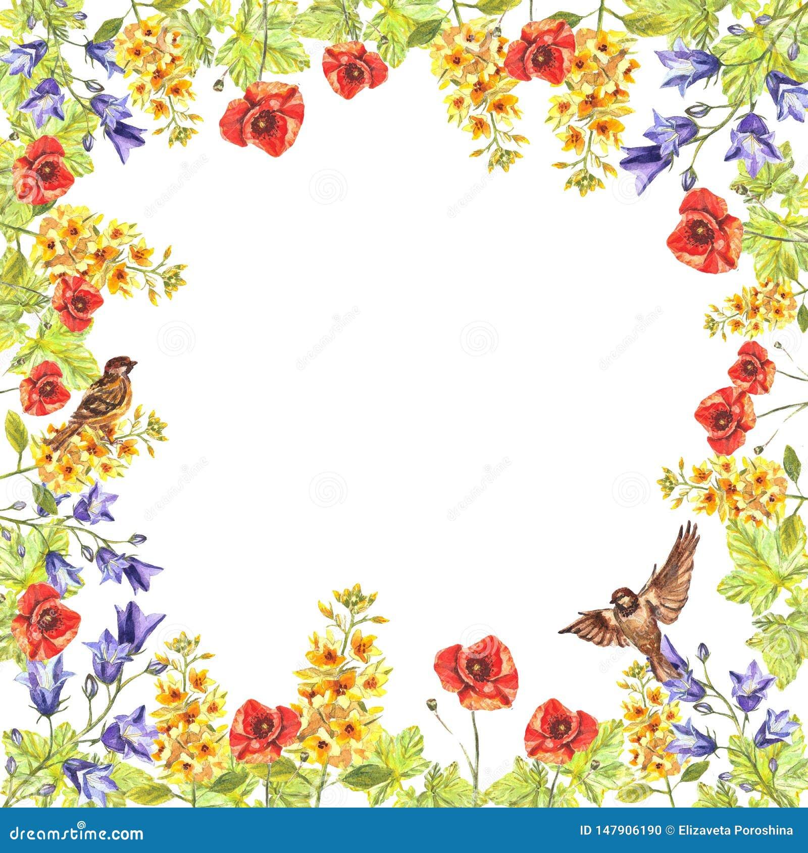 Cadre carré d aquarelle d eremurus, chiots, jacinthes des bois, feuilles, moineaux