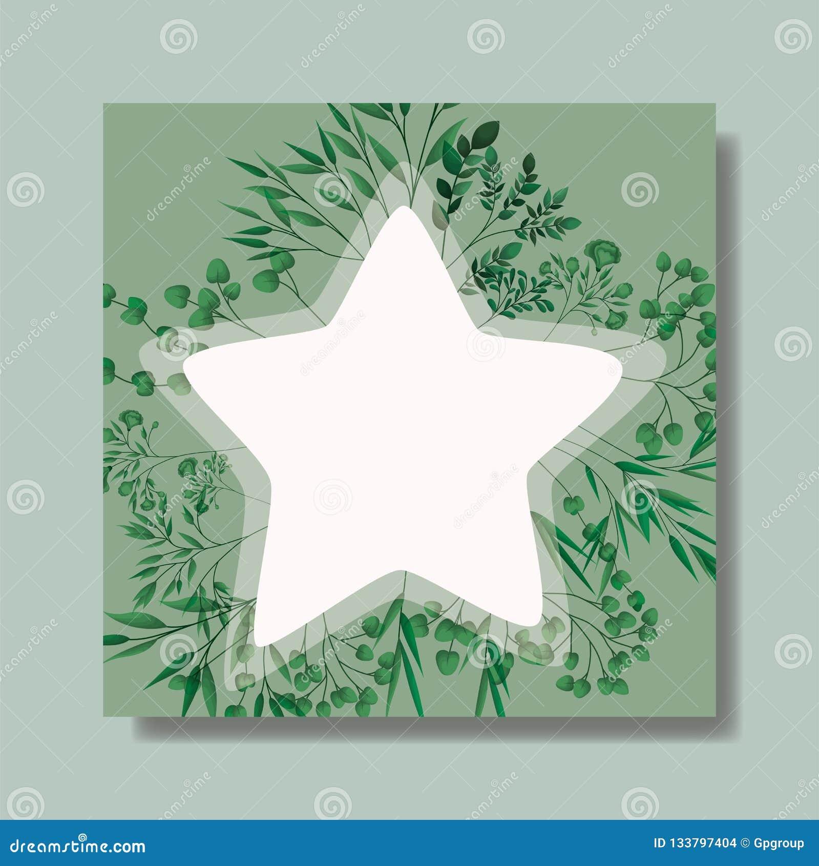 Cadre d étoile avec des feuilles de laurier