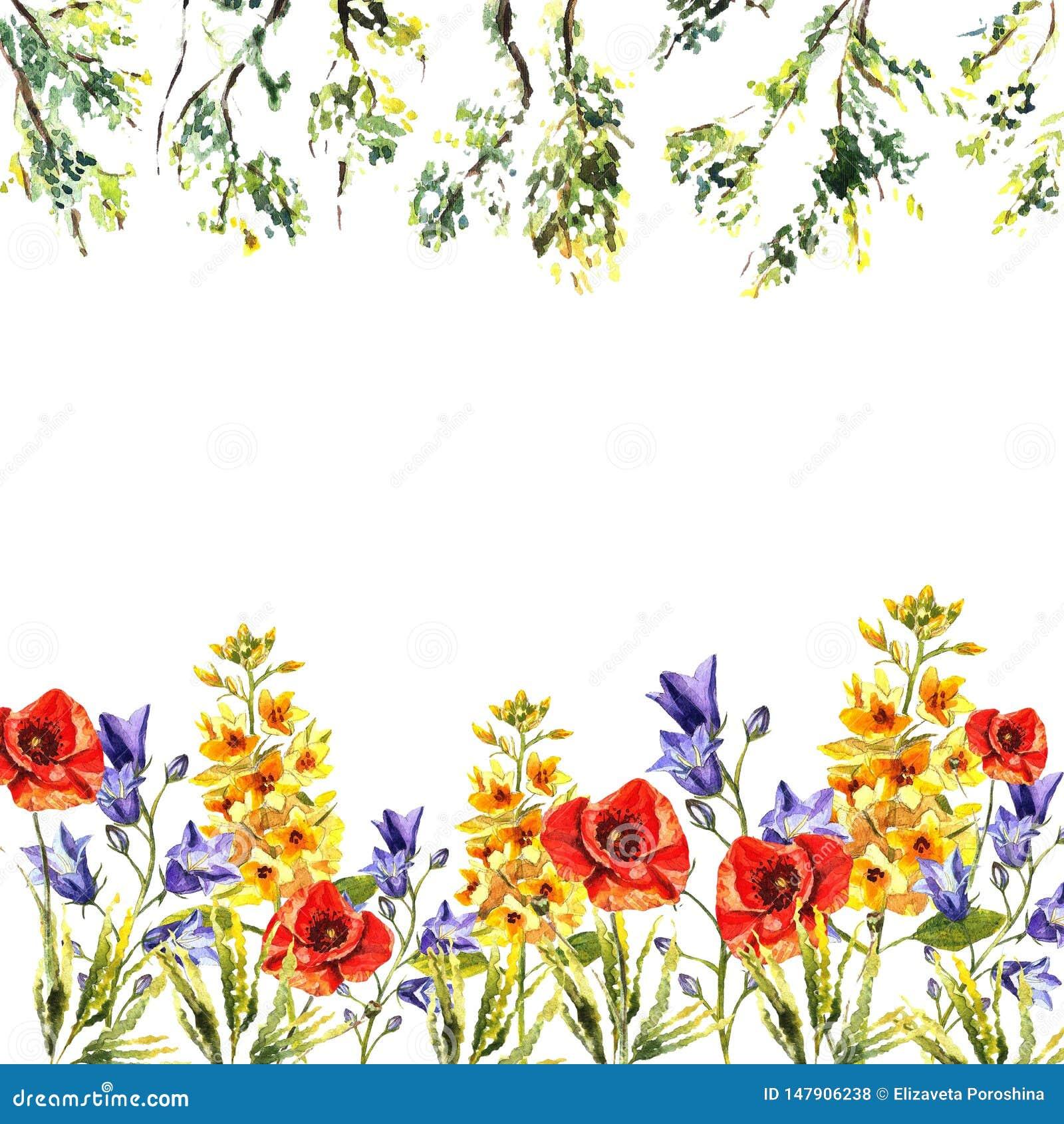Cadre d aquarelle des jacinthes des bois, chiots, eremuruses, feuilles, brunchs des arbres