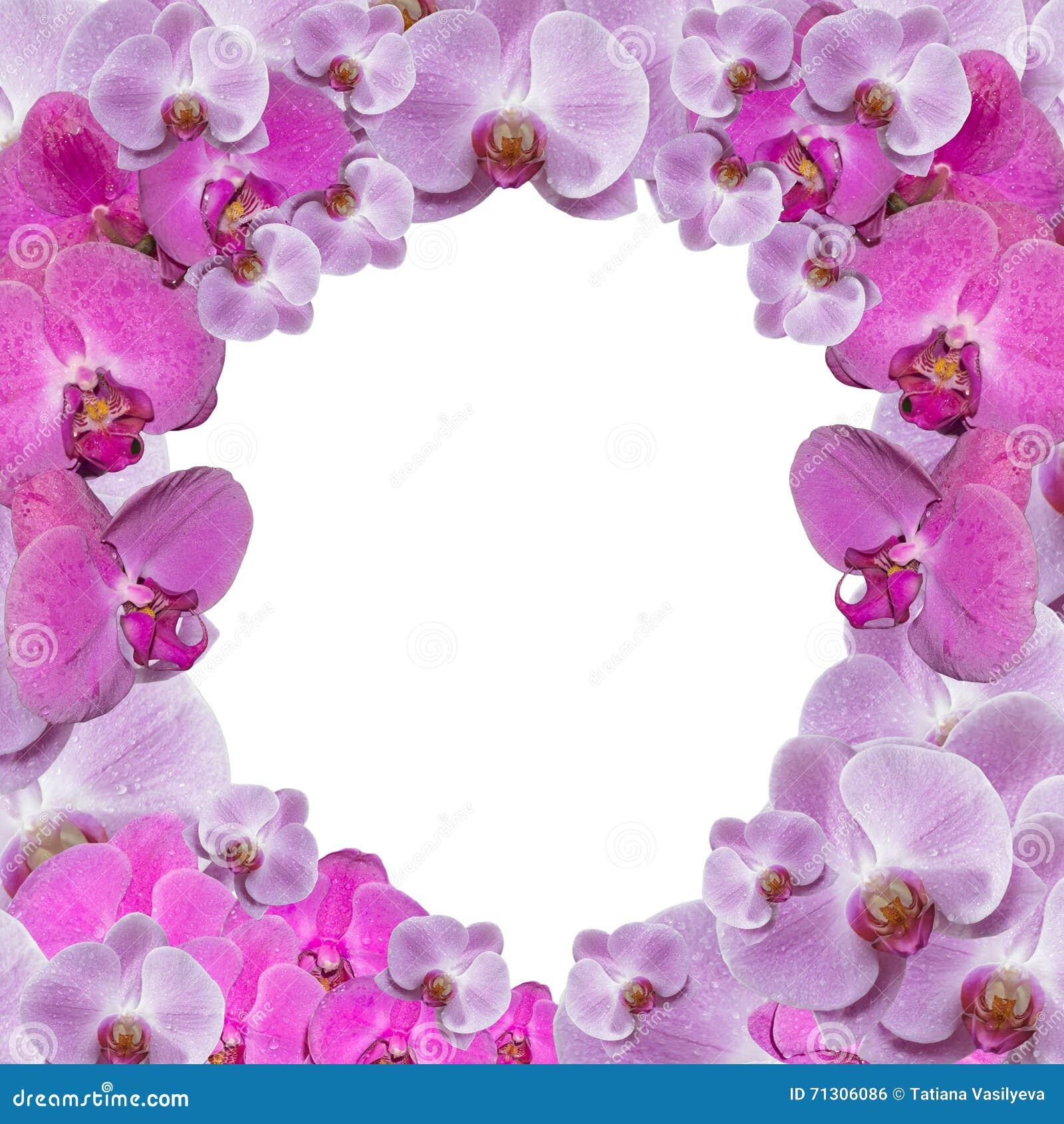 Cadre de fête avec des orchidées