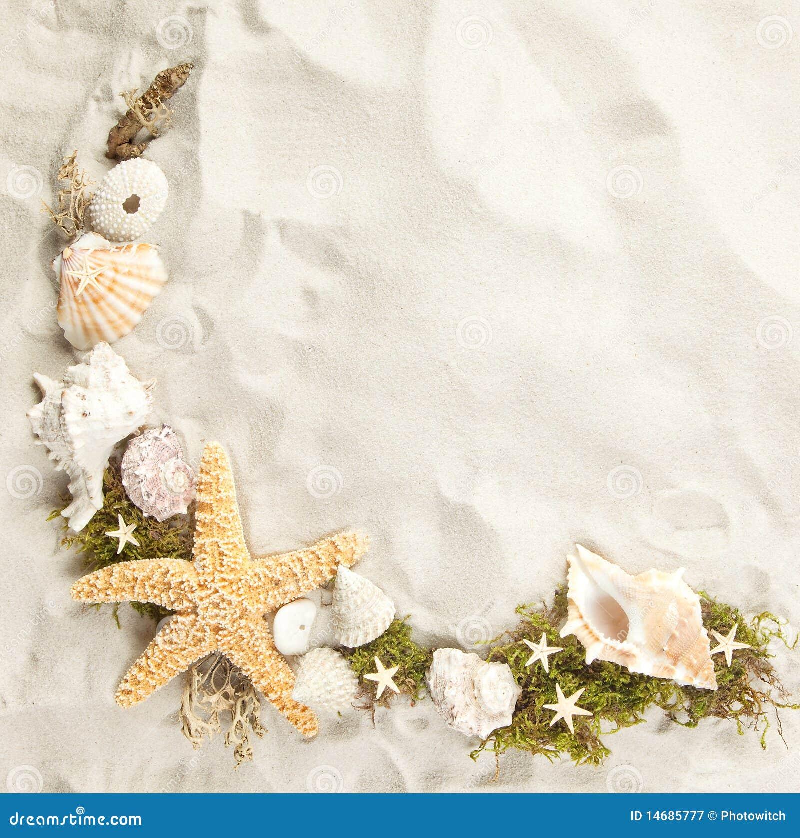 Cadre des seashells