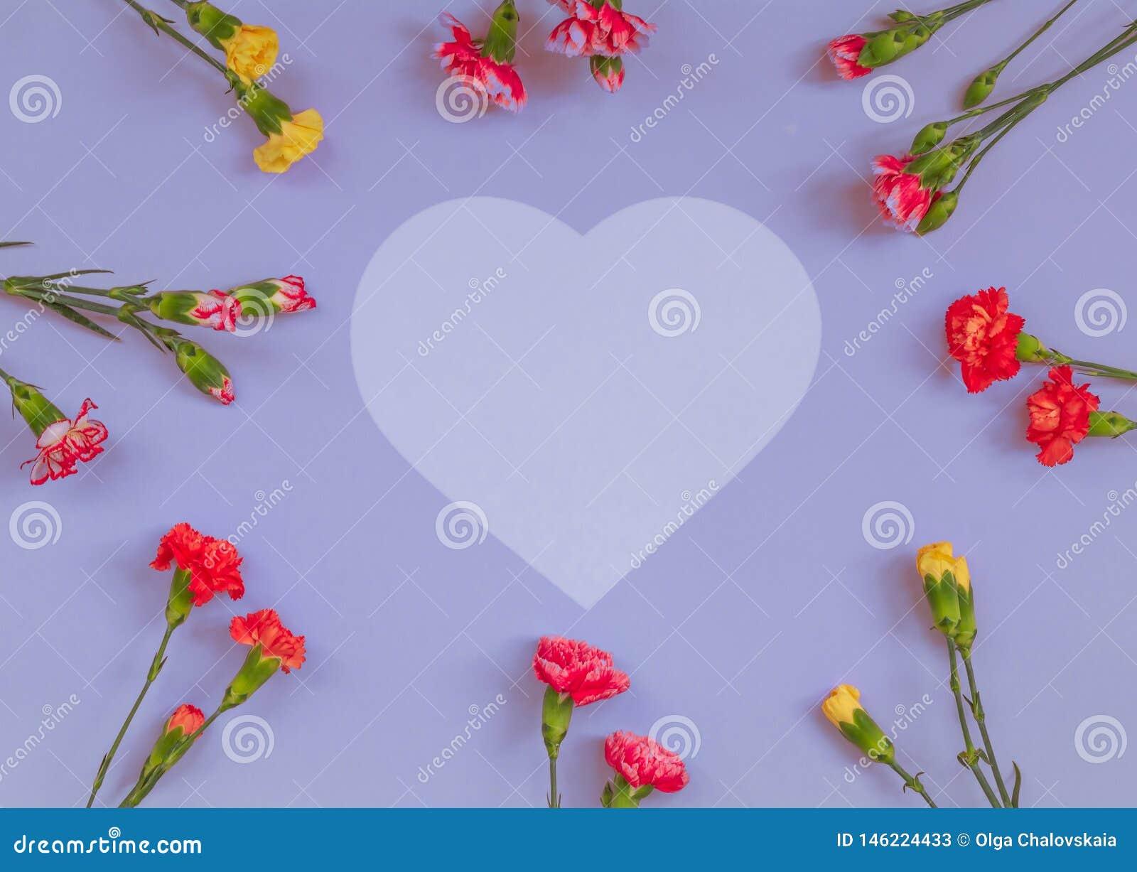Cadre en forme de coeur de fleurs d oeillet