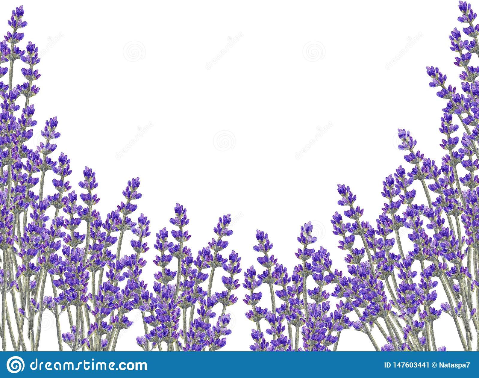 Cadre floral d aquarelle avec des fleurs de lavande