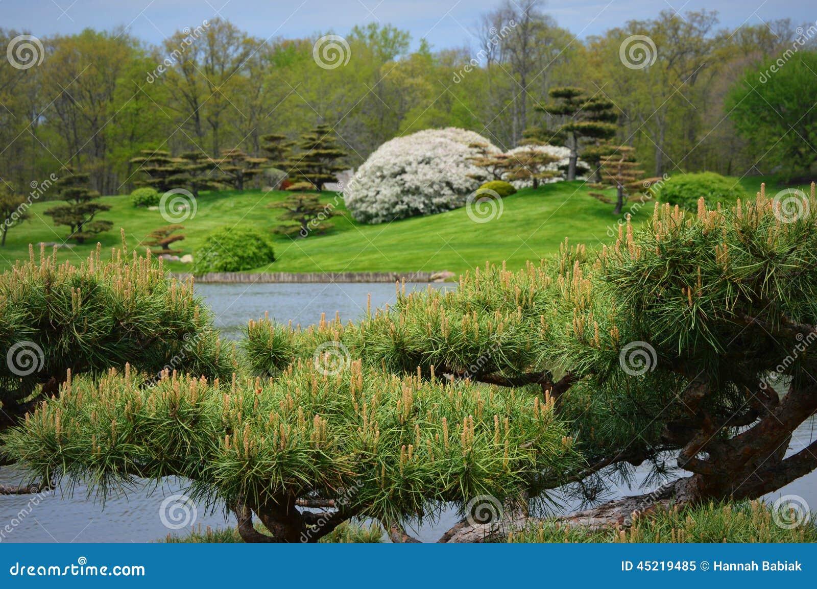 Cadre japonais de bonsa s de jardin photo stock image for Achat jardin japonais
