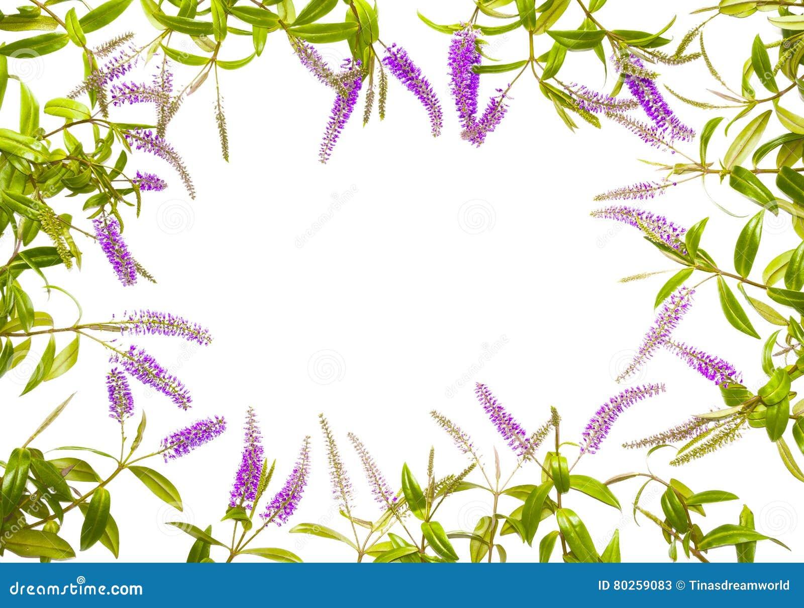 Cadre lilas de fleur d été