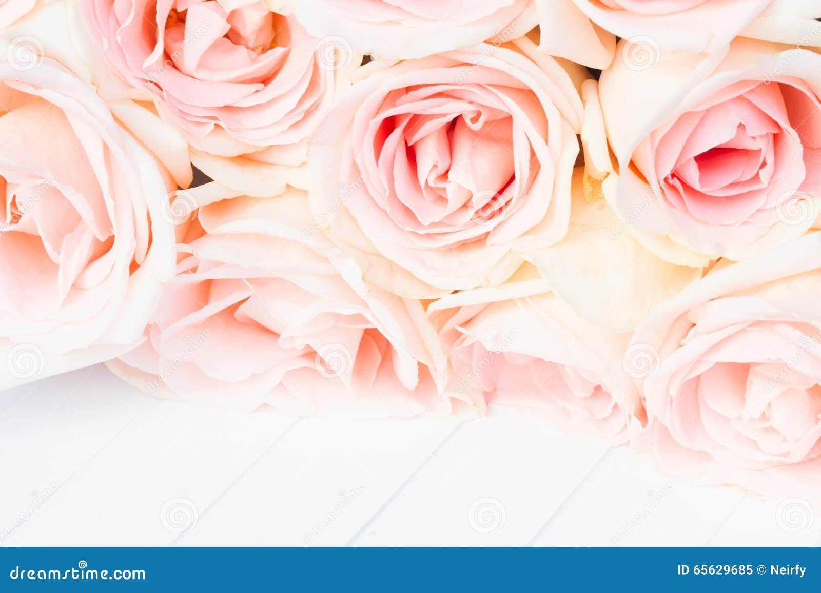 Cadre rose frais de roses
