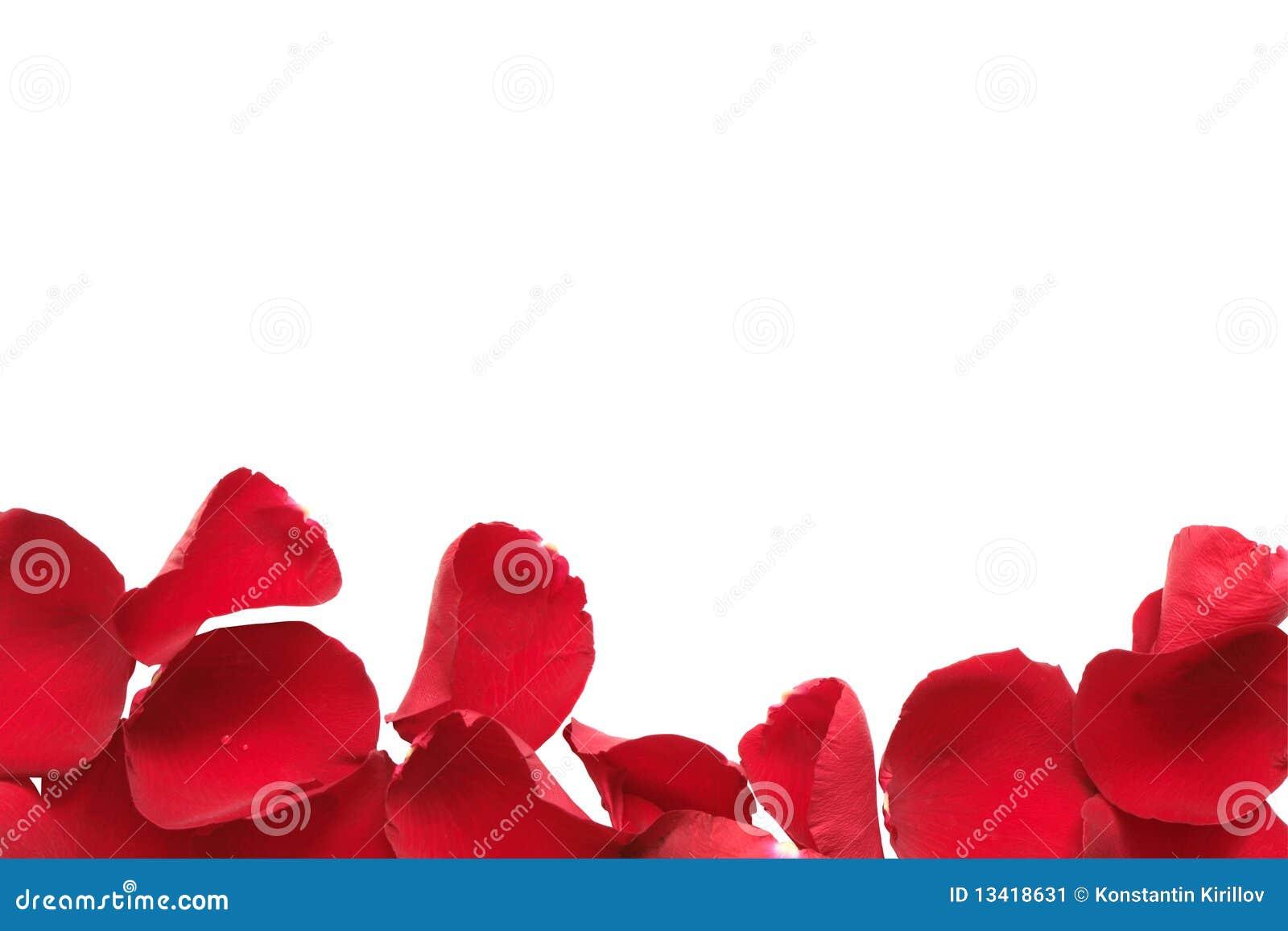 cadre rouge de p tale de rose image stock image du clater amour 13418631. Black Bedroom Furniture Sets. Home Design Ideas
