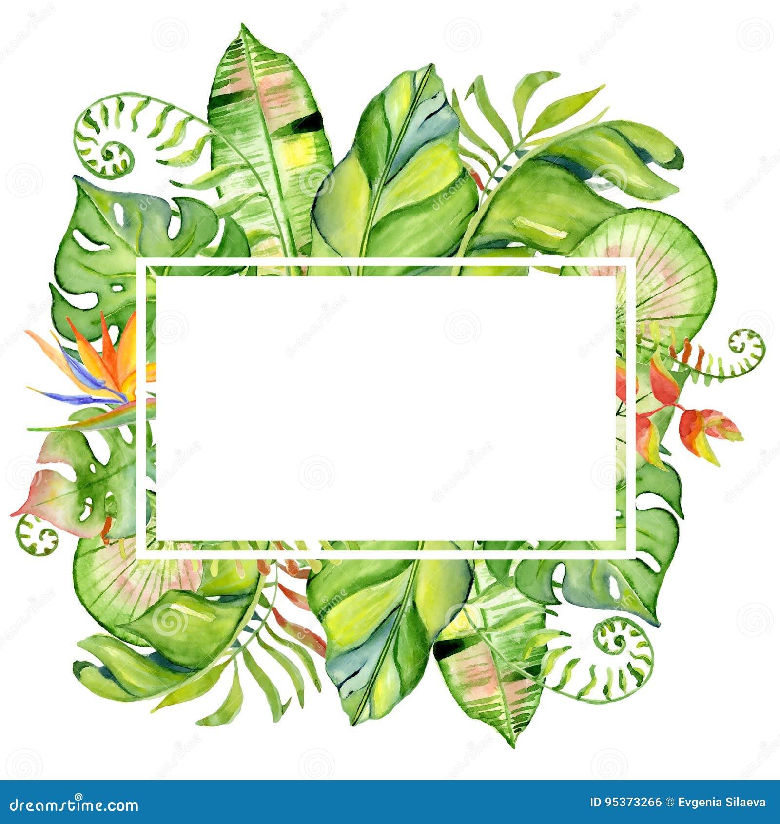Cadre tropical de feuilles d aquarelle