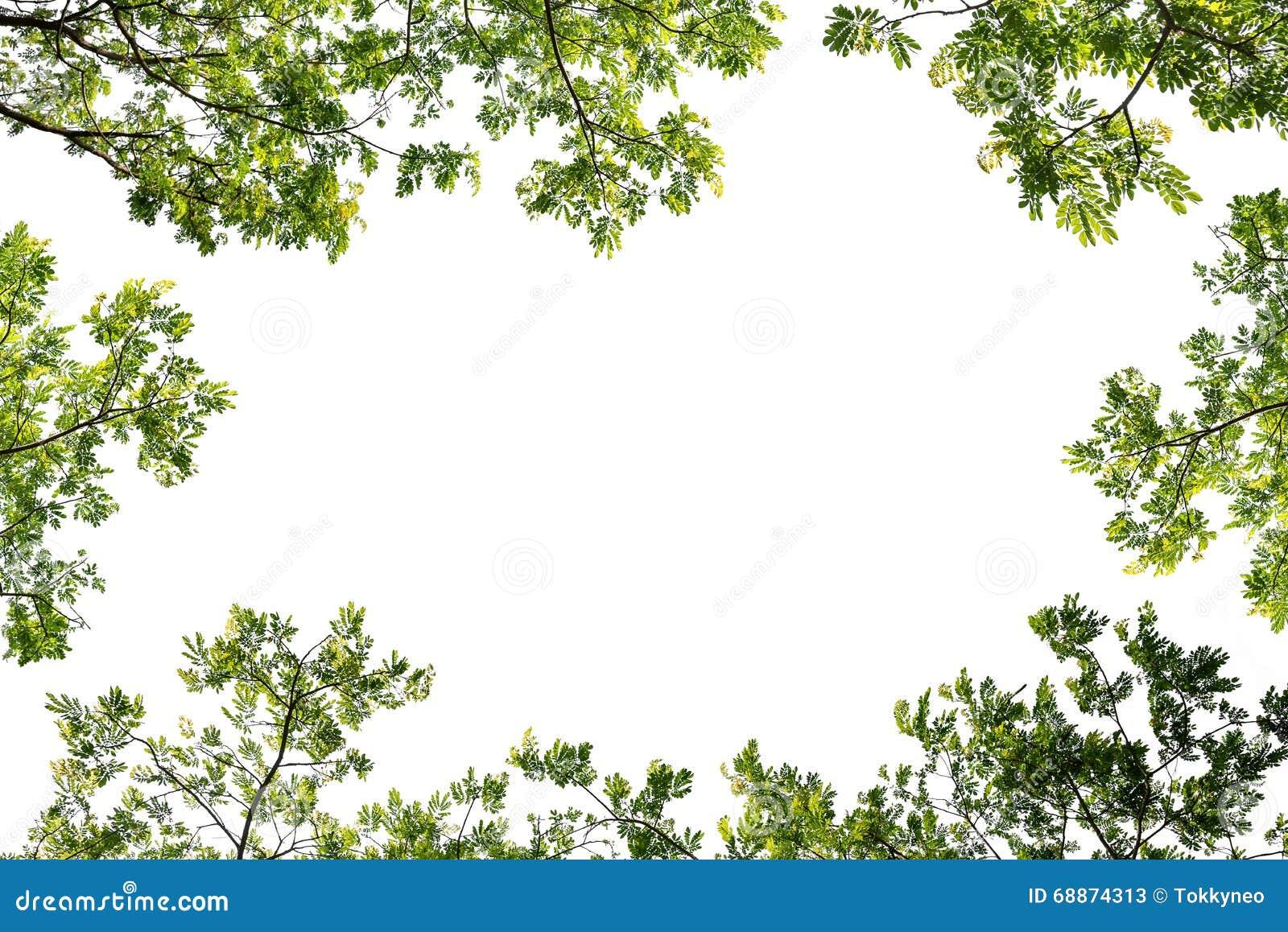 cadre vert de feuille de branche pour la saisie des textes image stock image 68874313. Black Bedroom Furniture Sets. Home Design Ideas