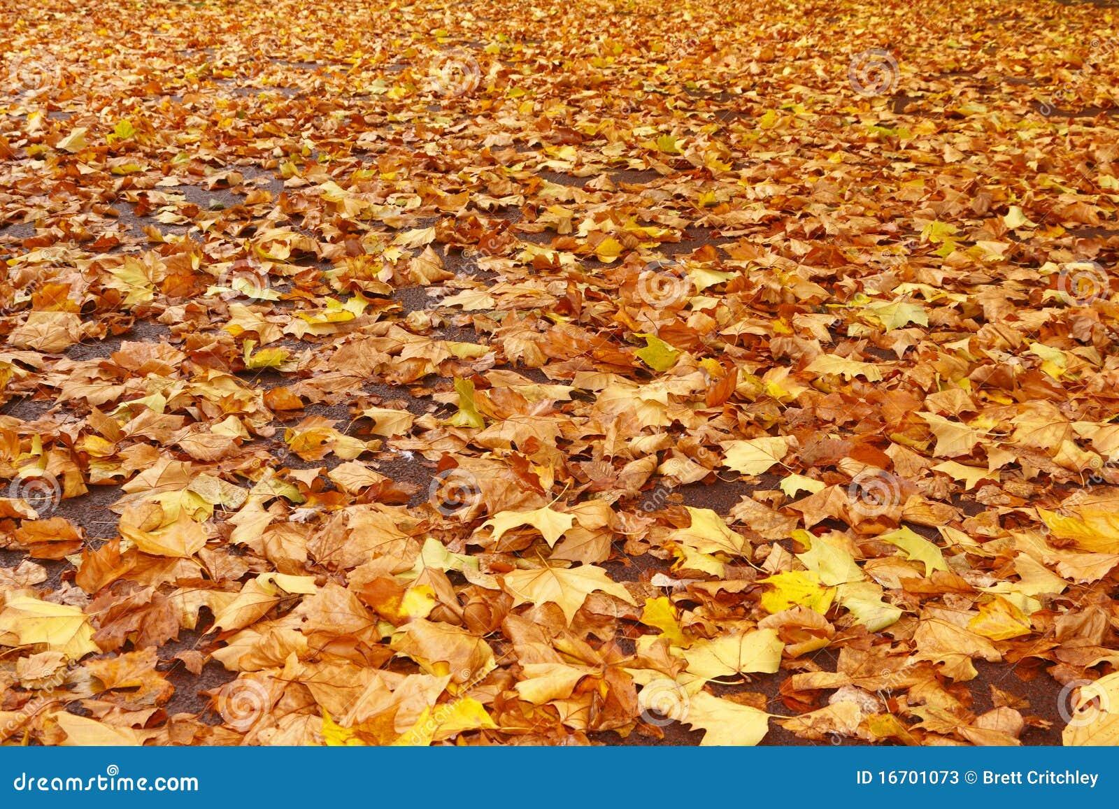Caduta dei fogli di autunno