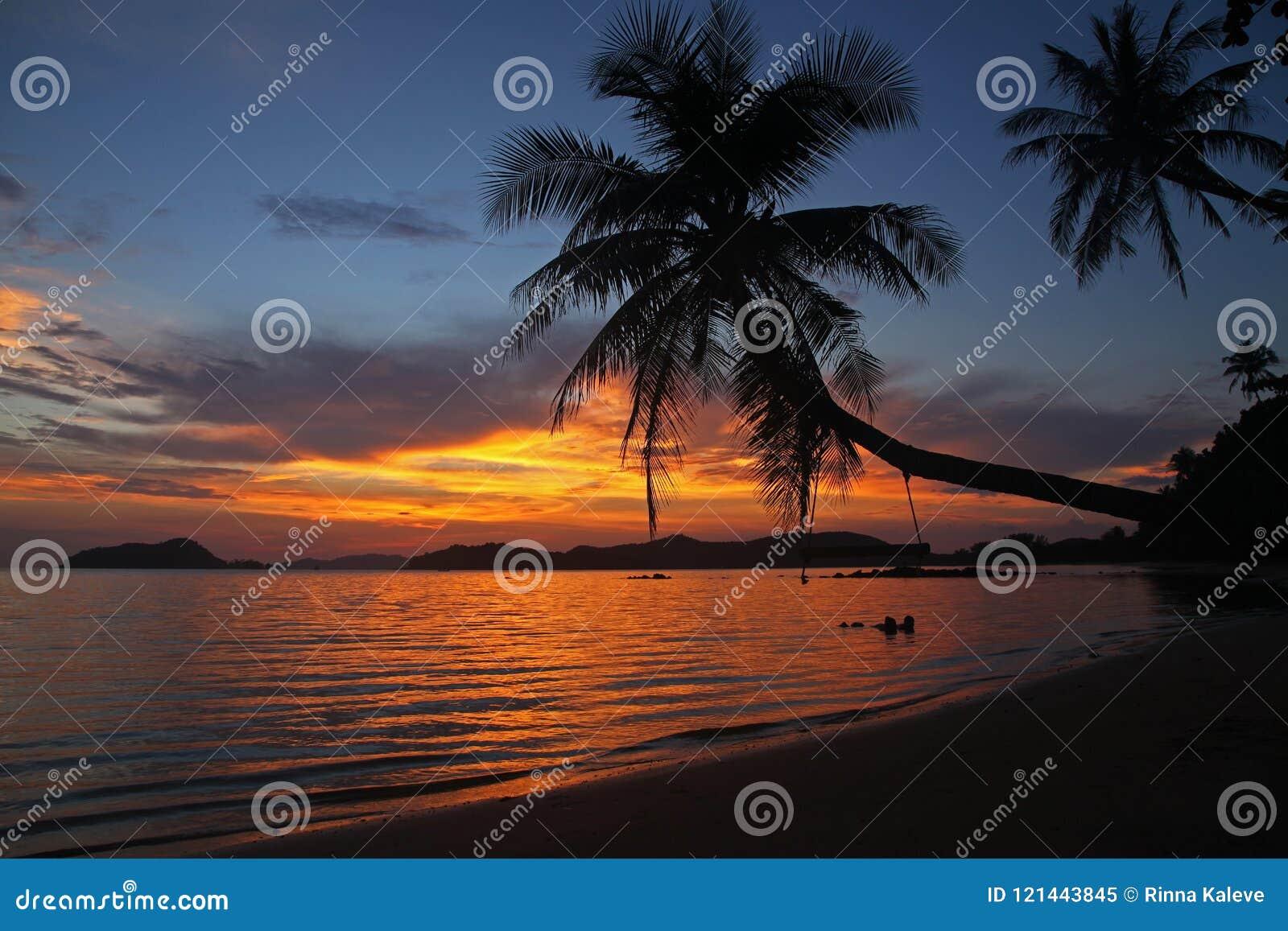 Caduta della culla o dell oscillazione tramonto dell ombra del cocco sul bello alla spiaggia Tailandia Trad di Mak Island del KOH