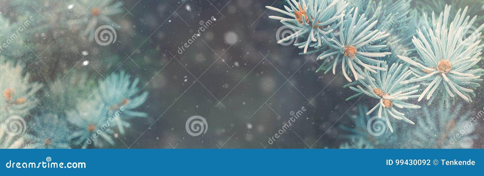 Caduta della neve nell insegna di magia della natura di Natale della foresta di inverno