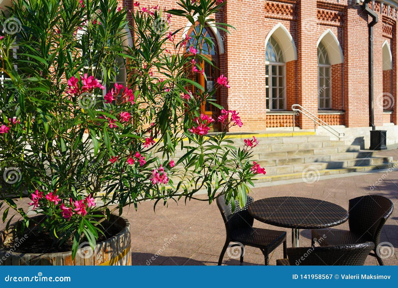 Café da rua do verão com as flores no fundo da construção histórica