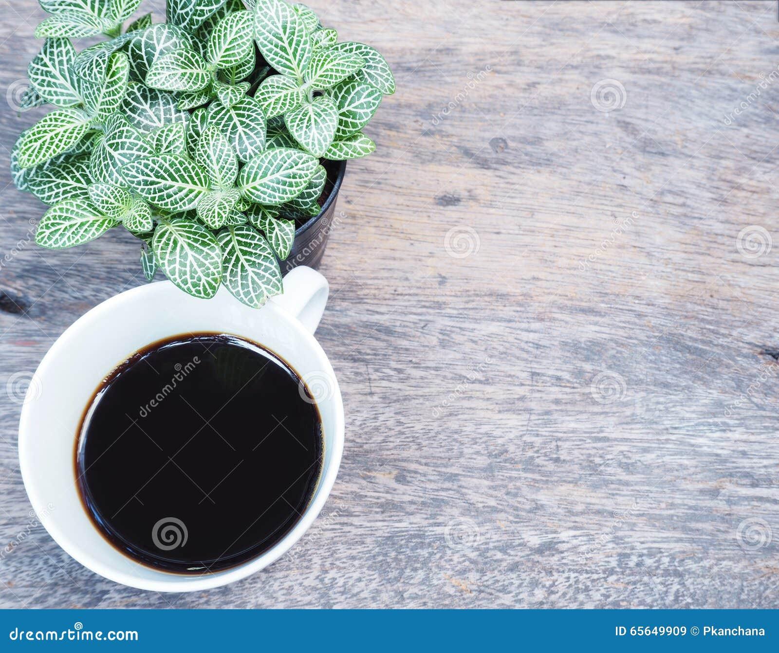 Café et petite plante
