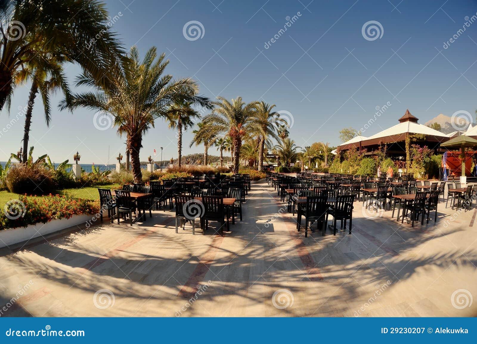 Download Café sob as palmas imagem de stock. Imagem de coco, filial - 29230207