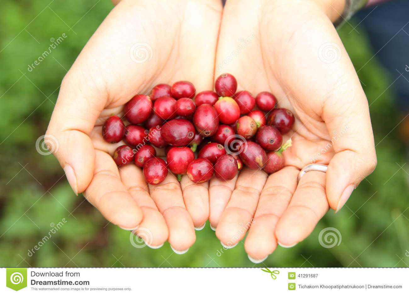 Caffè-albero Guatemala