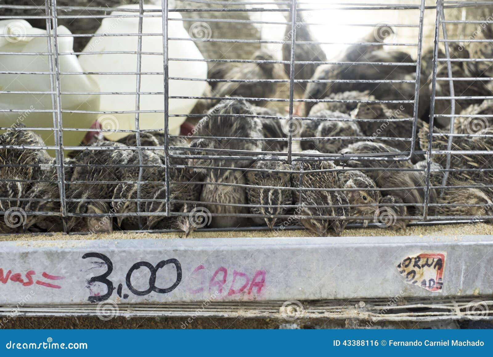 cailles dans les cages vendre photo stock image 43388116. Black Bedroom Furniture Sets. Home Design Ideas