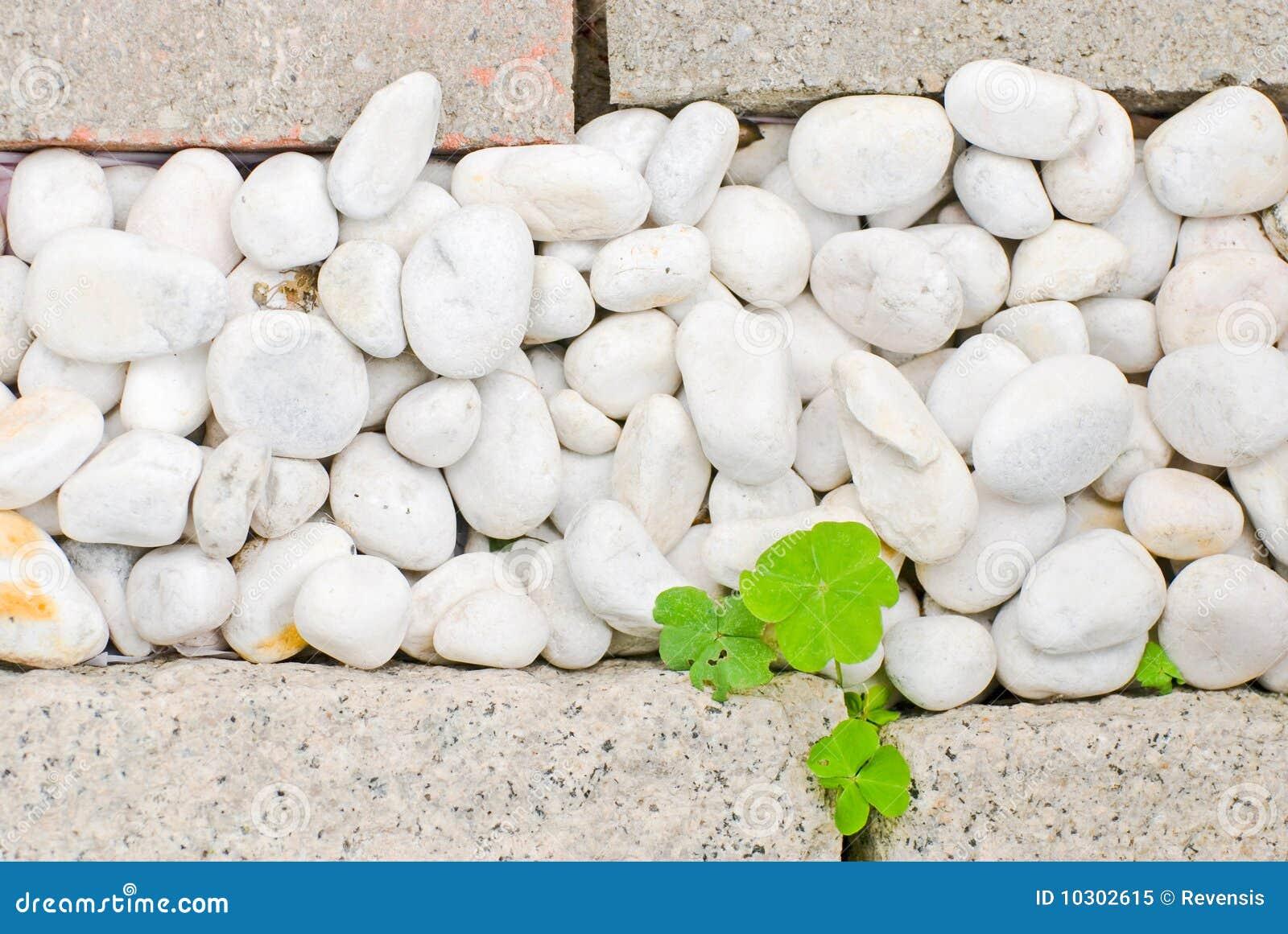 Caillou blanc avec la lame verte photo libre de droits for Achat caillou blanc pour jardin
